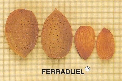 ALMENDRO FERRADUEL ®