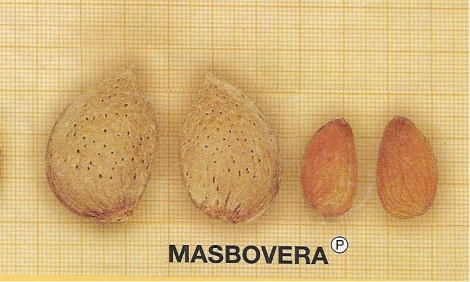ALMENDRO MASBOVERA ®