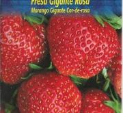 FRESA GIGANTE ROSA