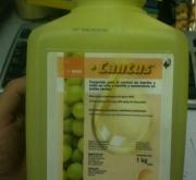 CANTUS (1 Kgr.).
