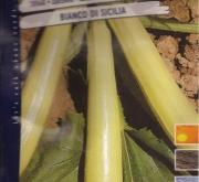 CALABACIN BLANCO DE SICILIA