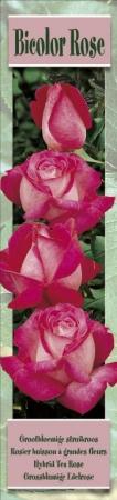 ROSAL BICOLOR ROSE [R]