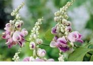 Patio Plant y Jules Troch - Planta Jardín en Caja