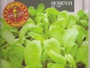 Semillas de Verduras Baby Leaf