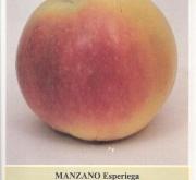 MANZANO ESPERIEGA