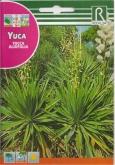 YUCA - YUCCA ALOIFOLIA