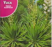 YUCA (4 Semillas).