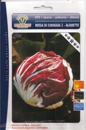 ACHICORIA ROJA DE CHIOGGIA 2 - Sel. Alquette (Cerca de 1,5 gr.).