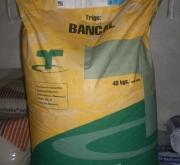 TRIGO BANCAL (40 Kgr.).