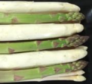 ESPARRAGO DARBELLA NT (200 garras)