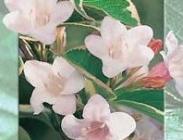 Arbustos - Planta Especial