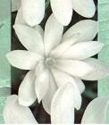 Planta Especial