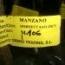 MANZANO DORSSET GOLDEN