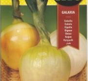 CEBOLLA GALAXIA F1 (1 gr.).