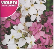 VIOLETA DE LOS JARDINES (6 gr.).