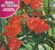 ARBOL DEL TULIPAN (0,5 gr.).