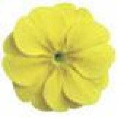 PRIMULA ACAULIS LIDER LEMON YELLOW (240 Plantas).