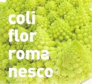 COLIFLOR ROMANESCO MS12