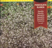 GIPSOFILA PANICULATA BLANCA (1 gr.).