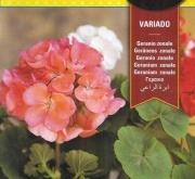 GERANIO ZONALE VARIADO (0,3 gr.).