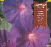 IPOMEA CAMPANILLA VIOLETA (8 gr.).