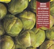COL DE BRUSELAS MEDIO ENANA DE LA HALLE