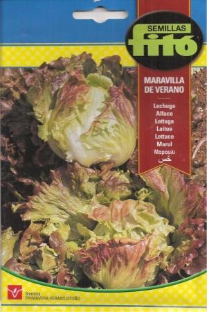 LECHUGA MARAVILLA DE VERANO
