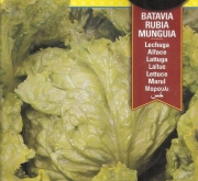 LECHUGA MUNGIA