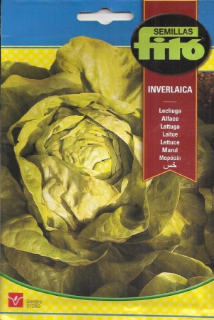 LECHUGA INVERLAICA (6 gr.).