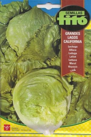 LECHUGA GRANDES LAGOS CALIFORNIA (6 gr.).