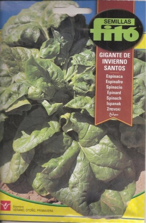ESPINACA GIGANTE DE INVIERNO SANTOS