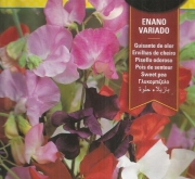 GUISANTE DE OLOR ENANO VARIADO (8 gr.).