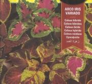 COLEUS ARCO IRIS VARIADO F1 (0,4 gr.).