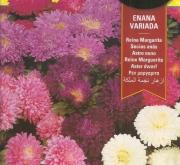 REINA MARGARITA ENANA VARIADA (2 gr.).