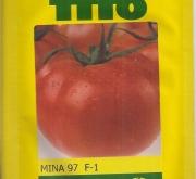 TOMATE MINA 97 (1.000 Semillas)