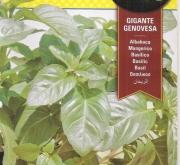 ALBAHACA GIGANTE GENOVESA (3 gr.).