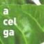 ACELGA M11