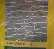 MELON CANTASAPO F1