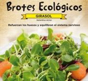 GIRASOL DE PIPAS - PARA BROTES