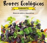 RABANITO - PARA BROTES