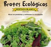 MOSTAZA BLANCA - PARA BROTES