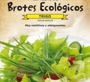 TRIGO - PARA BROTES