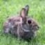 CUNIREP GRANULADO Conejos, Liebres y Roedores (5 Kgr).