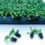IMPATIENS SUPER ELFIN XP ROSE IMPROVED (240 Plantas).
