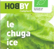 LECHUGA ICEBERG ECOLÓGICA MSE6