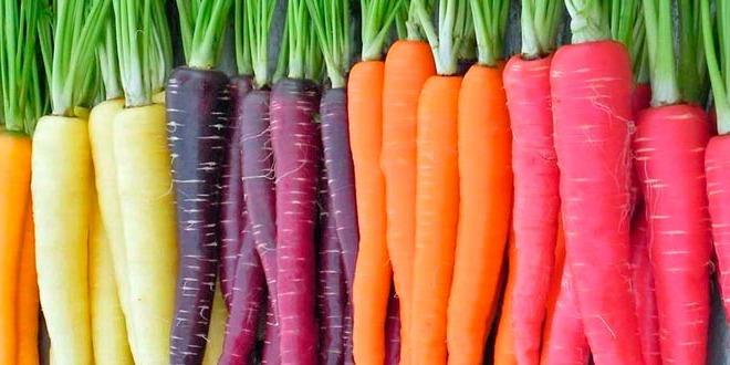 Zanahoria Colores Ms12 Fitoagricola Pongamos como ejemplo nuestras variedades de zanahoria. zanahoria colores ms12 fitoagricola