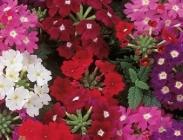 plantel de flores