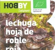 LECHUGA HOJA DE ROBLE ROJA ECOLÓGICA MSE6