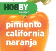 PIMIENTO CALIFORNIA NARANJA M11