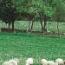 REGMIX ÁCIDO (10 Kgr.).